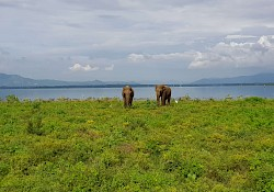 Happy elephants in Udawalawa