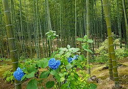 Bamboo grove's green fits perfectly with blue flowers